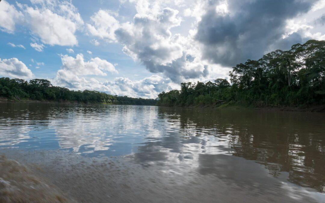 From rhino beetles to piranhas in the Amazon Jungle